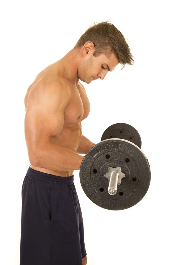 Muscular system - Wikipedia