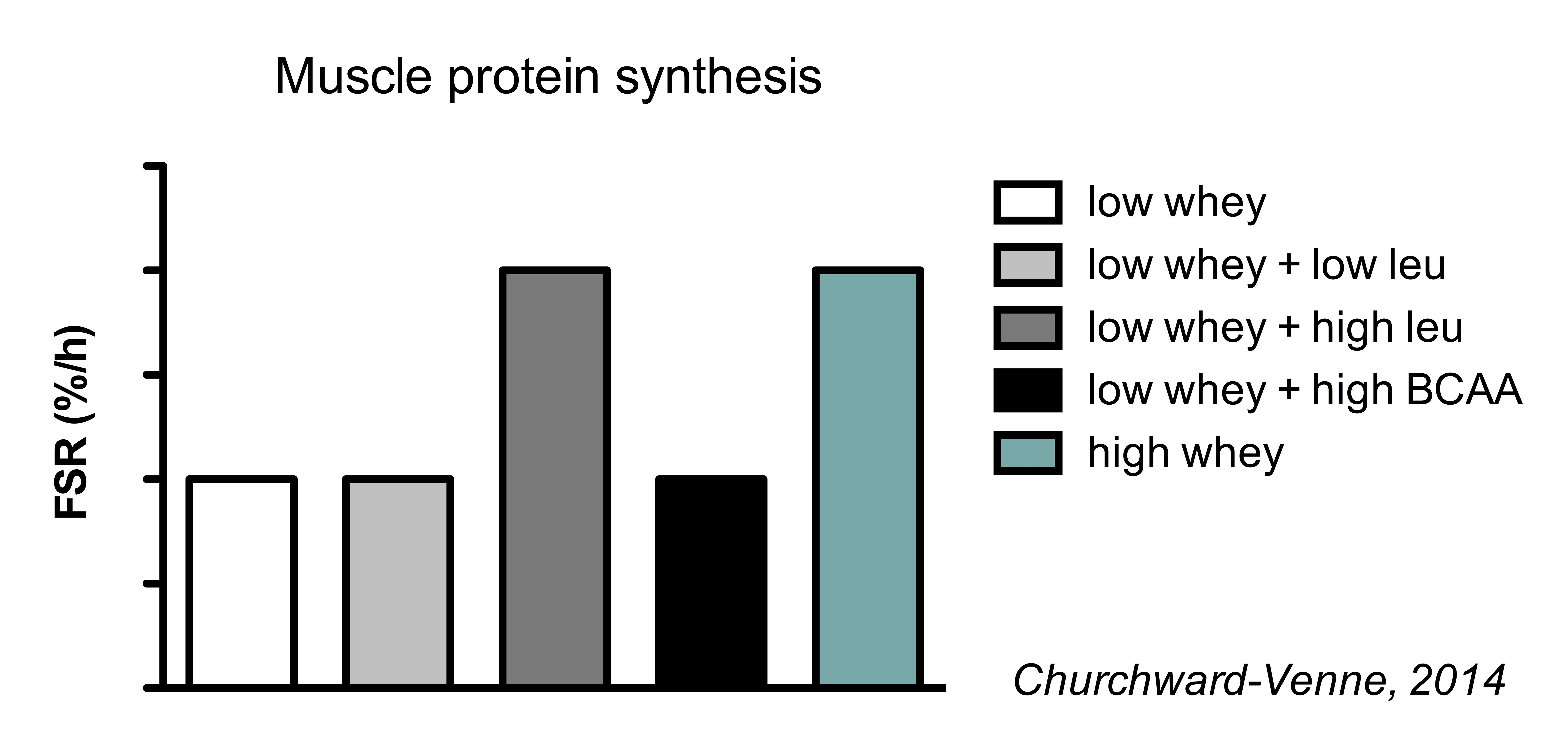 protien synthesis