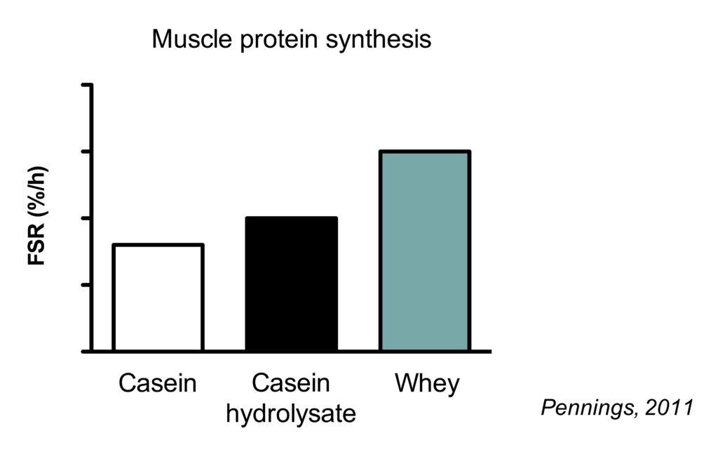 Whey vs casein vs casein hydrolysate