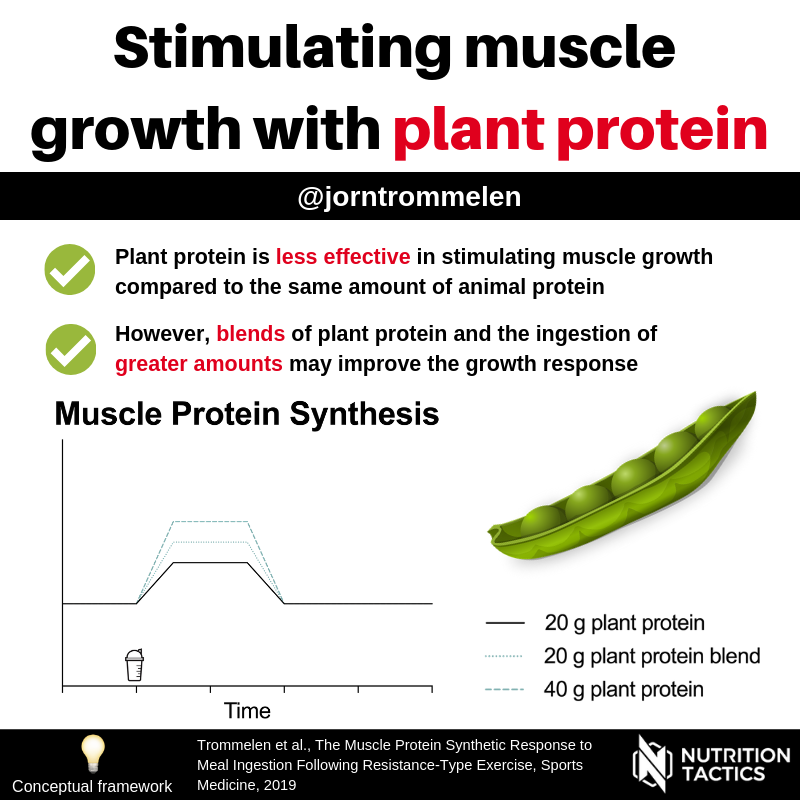 Plant protein for muscle growth